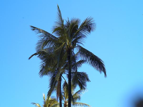 SHO-WATANABE-HAWAII1.png