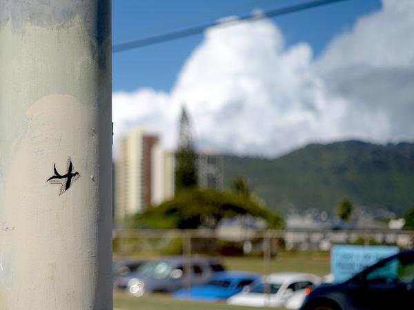 SHO-WATANABE-HAWAII3.png